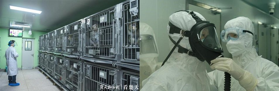 Wuhan Scientists Planned to Release Coronaviruses Into Bat Caves 18 Months Before Pandemic